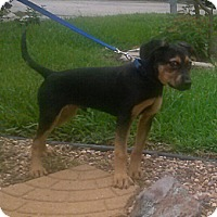 Adopt A Pet :: Maxfield - Kingwood, TX