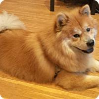 Adopt A Pet :: Charlie - Tillsonburg, ON