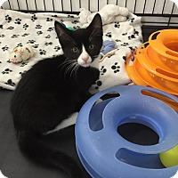 Adopt A Pet :: Virgil - Speonk, NY