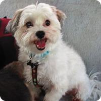 Adopt A Pet :: SAMIE - Jacksonville, FL