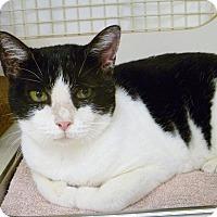 Adopt A Pet :: Kay Kay - Naples, FL
