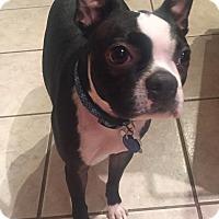 Adopt A Pet :: Webster - Jackson, TN