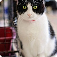 Adopt A Pet :: Desiree - Markham, ON