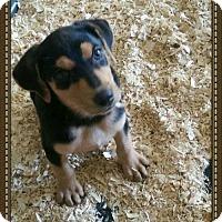 Adopt A Pet :: Chrissy - Granbury, TX