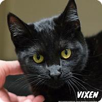 Adopt A Pet :: Vixen - Hanna City, IL