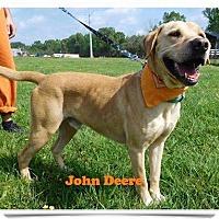 Adopt A Pet :: John Deere - St. Francisville, LA