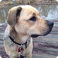Adopt A Pet :: Skye - Kingwood, TX