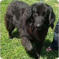 Adopt A Pet :: Fiona Urgent/reduced - Staunton, VA