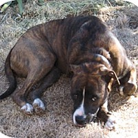 Adopt A Pet :: Missy - Santa Fe, NM