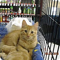 Adopt A Pet :: Finn - Riverside, RI