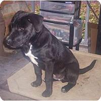 Adopt A Pet :: Ranger - Allentown, PA