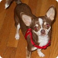Adopt A Pet :: Sarah - dewey, AZ