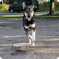 Adopt A Pet :: Shiloh - Hamilton, ON