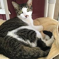 Adopt A Pet :: Annie - Temecula, CA