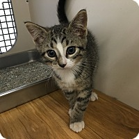 Adopt A Pet :: Sam - Richmond, VA