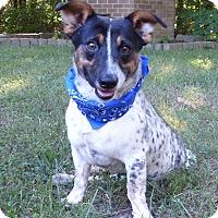 Adopt A Pet :: Gilmer - Mocksville, NC