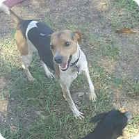 Beagle Mix Dog for adoption in Euless, Texas - Radar - Courtesy Post