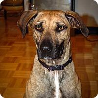 Adopt A Pet :: Riya - St Helena, CA