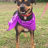 Adopt A Pet :: FCI in Texarkana, TX - Texarkana, TX
