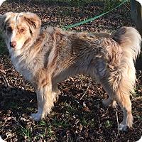 Adopt A Pet :: Alex - Starkville, MS
