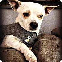 Adopt A Pet :: Otis - Tijeras, NM