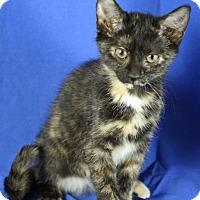 Adopt A Pet :: Virginia - Winston-Salem, NC