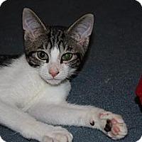 Adopt A Pet :: Hawk (LE) - Little Falls, NJ
