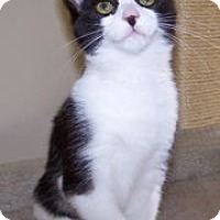 Adopt A Pet :: K-Herrley1-Billie Jo - Colorado Springs, CO