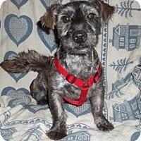 Adopt A Pet :: Juneau - North Benton, OH