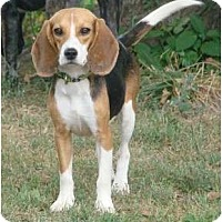 Adopt A Pet :: Emma - Courtesy - Indianapolis, IN
