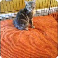 Adopt A Pet :: Penolpe - Mobile, AL