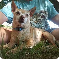 Adopt A Pet :: Buddie - Marietta, GA