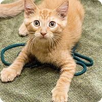 Adopt A Pet :: Otto - Chicago, IL