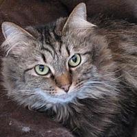 Adopt A Pet :: Ava - Harrisburg, NC
