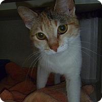 Adopt A Pet :: Dee Dee - Hamburg, NY