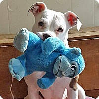 Adopt A Pet :: Lily - Troy, MI