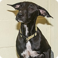 Adopt A Pet :: Luli - Elmwood Park, NJ