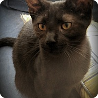 Adopt A Pet :: Irene - Fairborn, OH