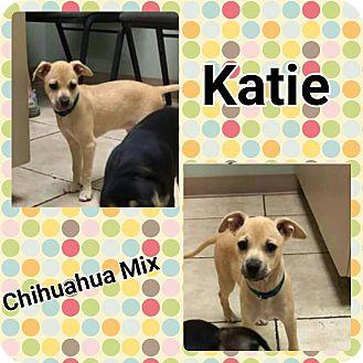 Chihuahua Mix Puppy for adoption in Harrisburg, North Carolina - Katie
