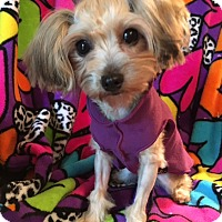 Adopt A Pet :: Bobbie Ann - Statewide and National, TX