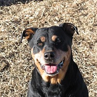 Adopt A Pet :: Neon - Laurel, MT