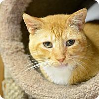 Adopt A Pet :: Cinnamon - Queens, NY