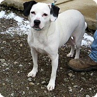 Adopt A Pet :: Chelsea - Indiana, PA