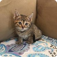 Adopt A Pet :: Hara - Tonawanda, NY