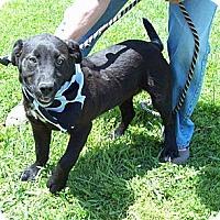 Adopt A Pet :: JETT/Mem Day Special Price - Glastonbury, CT