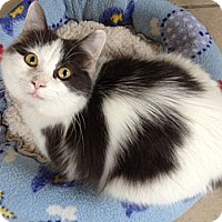 Adopt A Pet :: Kizzy - Byron Center, MI