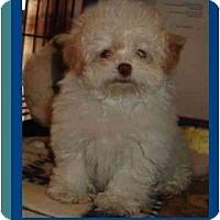 Adopt A Pet :: Adeline - Berlin, WI