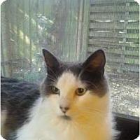 Adopt A Pet :: Noel - Lakeland, FL