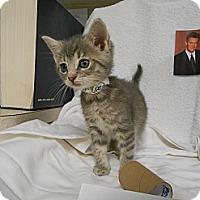 Adopt A Pet :: Chandler - Maywood, NJ