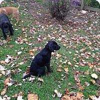 Adopt A Pet :: Andrea - Morgantown, WV